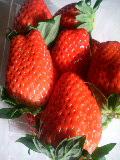 イチゴ!大好き♪